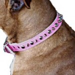 pink spiked dog collar